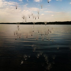 photo of a lake, with dandelion seeds